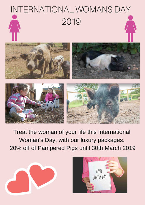 National Pig Day / International Woman's Day