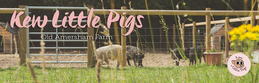 Kew Little Pigs farm video