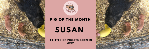 Miniature Pig of the month January 2020