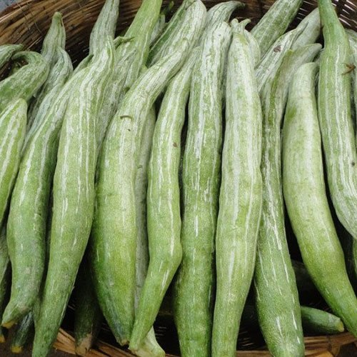 Snake Gourd 1lb appx. - Indian Bazaar - Online Indian Grocery Store