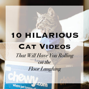 10 Hilarious Cat Videos That Will Have You Rolling on the Floor Laughing