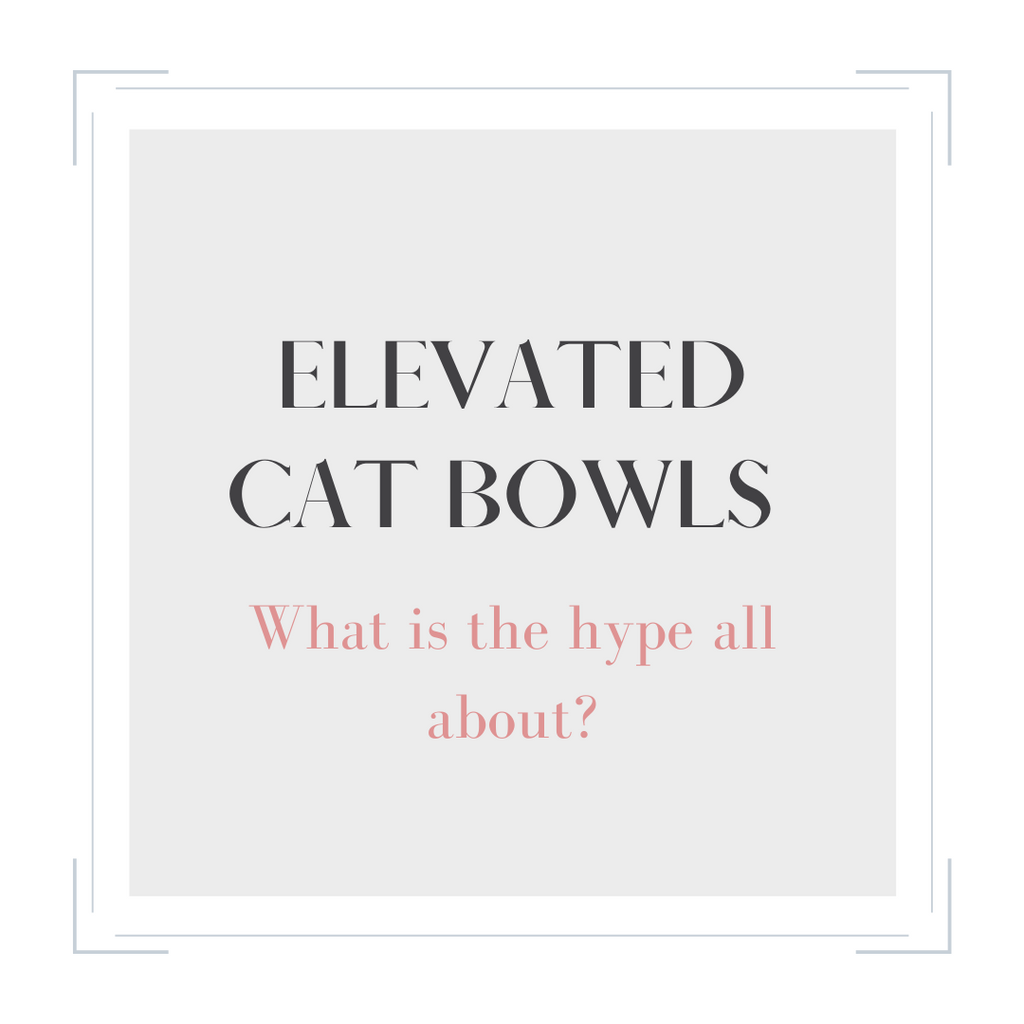 Elevated Cat Bowls: Are they Necessary?