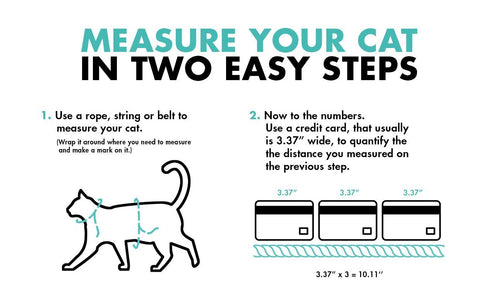 how to measure your cat