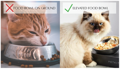 Benefits of Elevated Cat Bowl