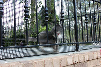 Cardinal Gates Heavy-Duty Outdoor Deck Netting, Black, 15'