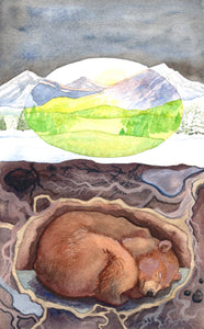 "Bear Hibernating - Original Watercolor Painting - 7""×11"""