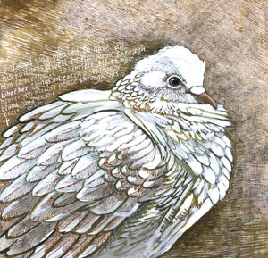 Dove Colossians - Art Print
