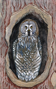 Great Grey Owl - Print