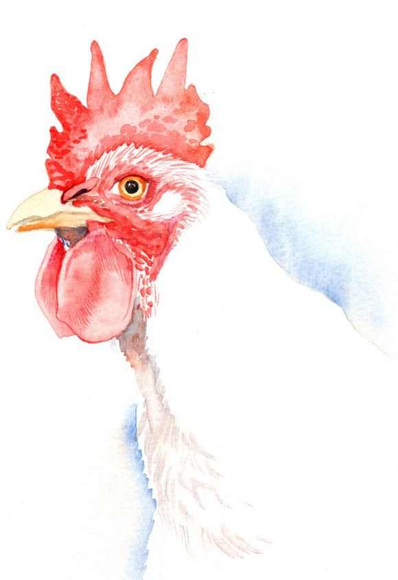 White Chicken - Art Print