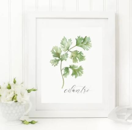 "White 8 x 10 textured art print with a cilantro plant watercolor print on the front with ""cilantro"" written in script underneath"