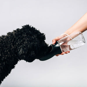 Original Black Thirsty Dog Bottle