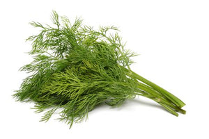 Dill - Retail