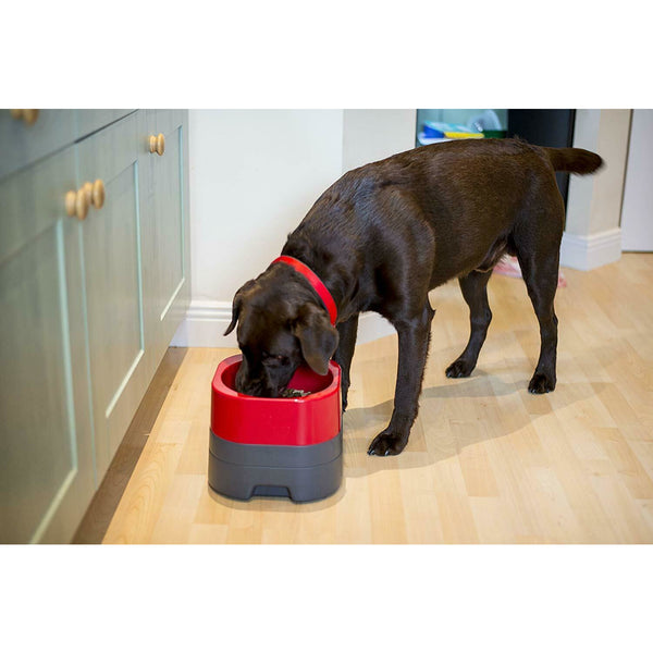 PetWeighter Large Heavy Elevated Dog Bowl Non Spill Won't Move!! - rovers-kit