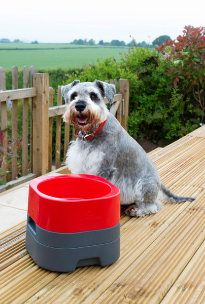 PetWeighter Small Heavy Elevated Dog Bowl Non Spill Won't Move!!