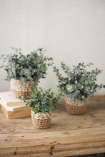 Load image into Gallery viewer, Set of 3 Eucalyptus Plants in Woven Pots