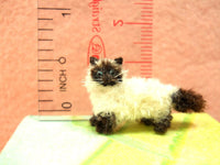 Miniature Himalayan Cat