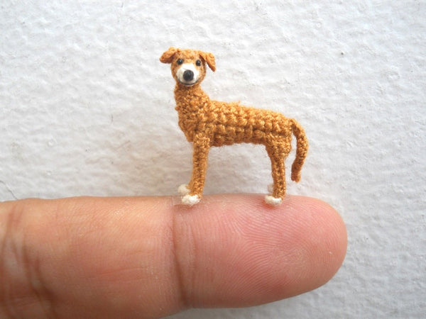 Miniature Greyhound