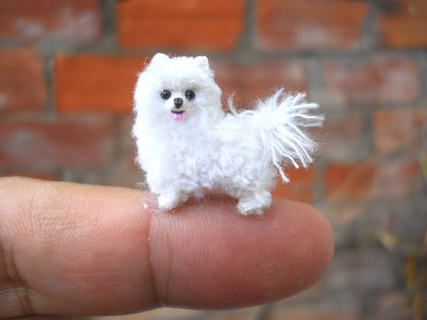 Miniature Teacup Pomeranian