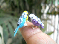 Miniature Budgerigar in Dome
