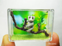 Miniature Slow Loris