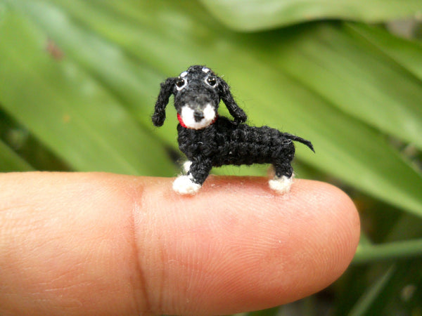 Micro Mini Dachshund, Black and White