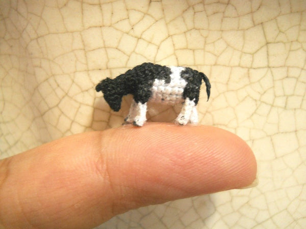 Miniature Cow