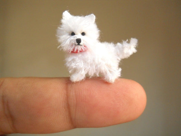 Miniature Westie Dog