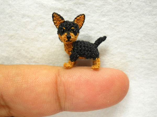 Black Tan Chihuahua Dog