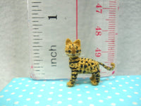 Micro Miniature Bengal Cat