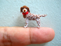 Miniature Pointer Dog