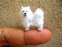 Miniature Samoyed