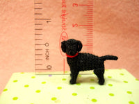 Miniature Black Labrador Retriever