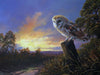 Barn Owl, The Night Shift - The Wallington Gallery