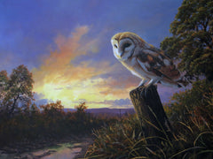 Barn Owl, The Night Shift