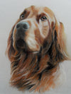 Red Setter - The Wallington Gallery