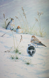 Birds and Flowers of the Castle of Mey - The Wallington Gallery