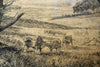 The Chillingham Cattle (sketch) - The Wallington Gallery