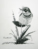 Bluethroat - 1