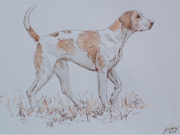 A Study of a Foxhound
