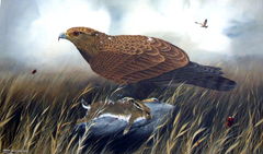 Golden Eagle with Brown Hare
