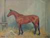 Racehorse Musidora - The Wallington Gallery