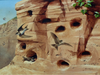 Sand Martins - The Wallington Gallery