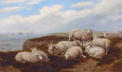 Sheep on Marsden Cliffs