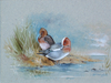 Widgeon - The Wallington Gallery