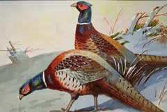 Pheasants in Winter