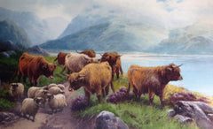 Highland Cattle and Sheep