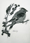 Waxwing - The Wallington Gallery