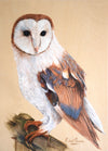 Barn Owl - The Wallington Gallery