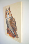 Long Eared Owl - The Wallington Gallery
