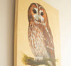 Tawny Owl - The Wallington Gallery